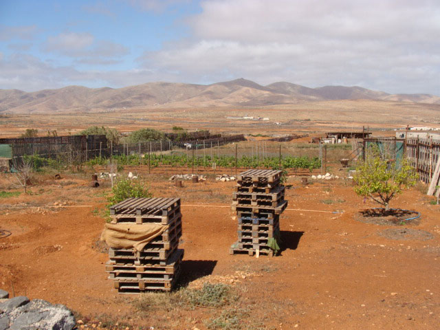 For sale!l typical canarian Finca in the village of La Ampuyenta on Fuerteventura