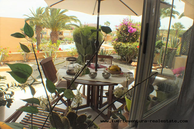 En vente! Appartement confortable à quelques minutes de la plage de Corralejo