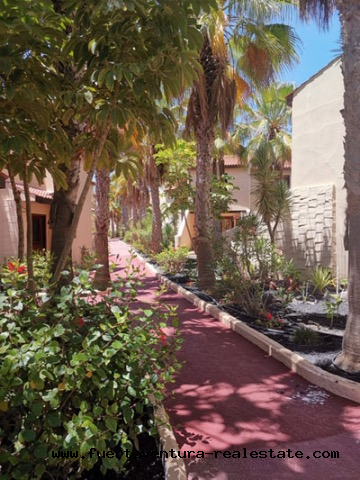 For rent! A nice apartment in Parque Holandes Fuerteventura