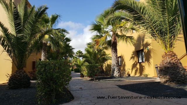 For sale! Apartment in the Oasis Papagayo Sport & Resort complex in the town of Corralejo.