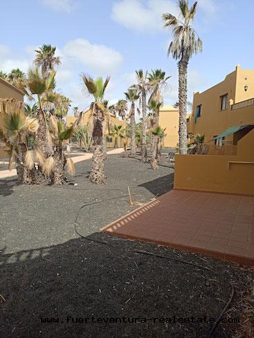 À vendre! Appartements dans le complexe Oasis Tamarindo II, situé dans la ville de Corralejo